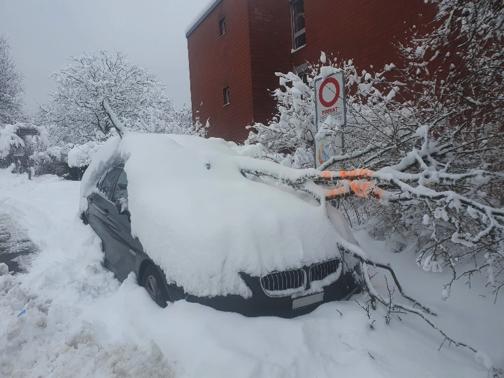 Notfällungen und abgebrochene Äste im Winter!