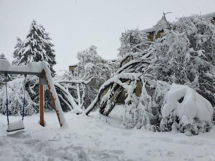 Baumbestandpflege im Winter!