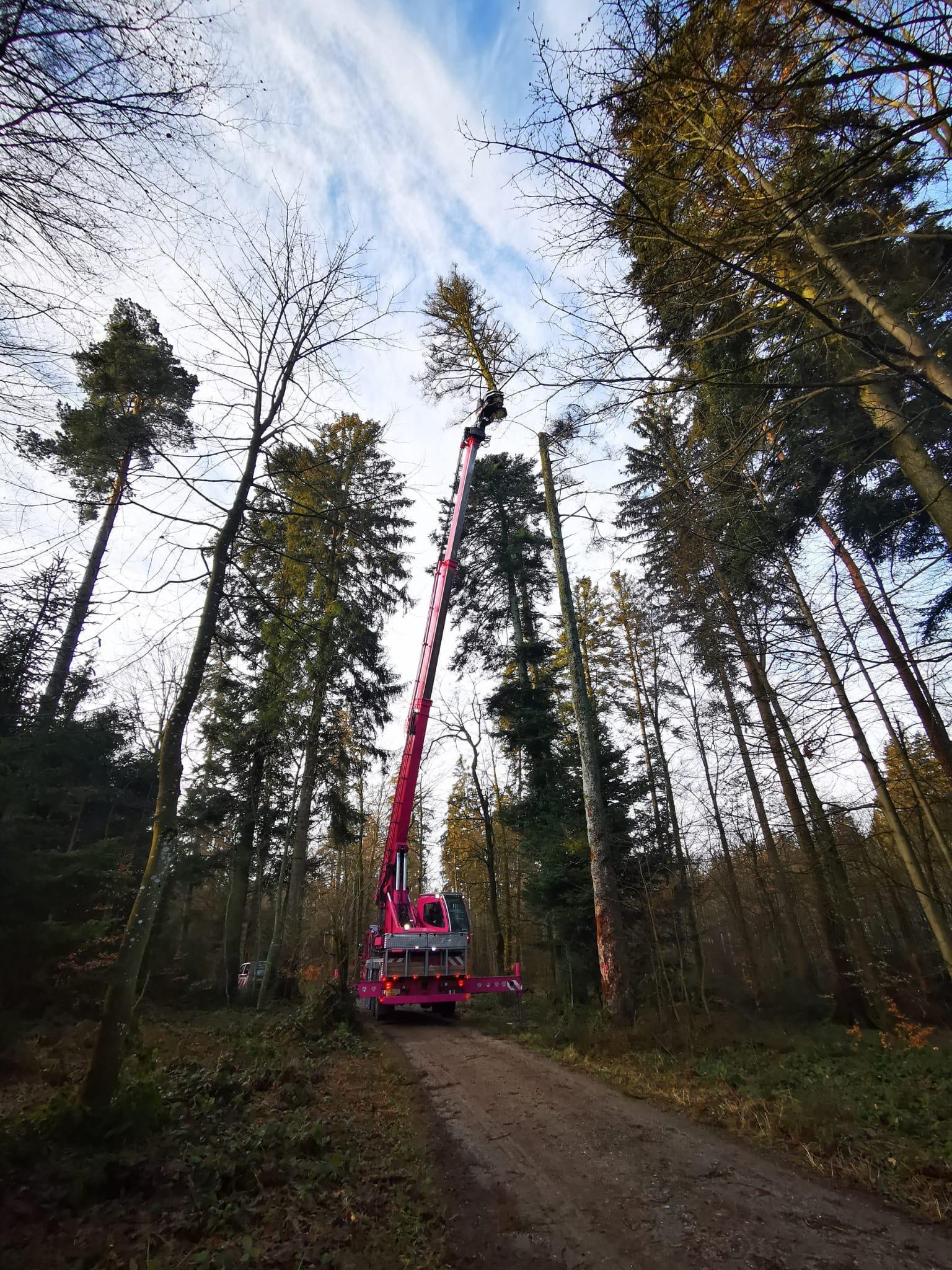 Biotopschnitt bei Bäumen