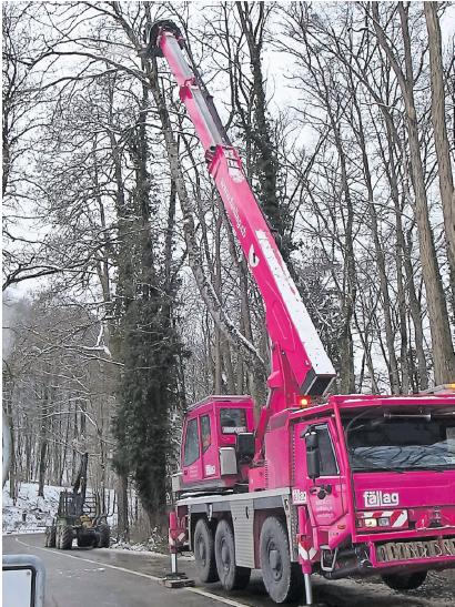 Bäume fällen – Risikoholz