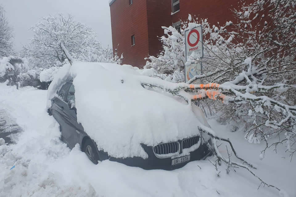 Baumbestand Ast auf Auto