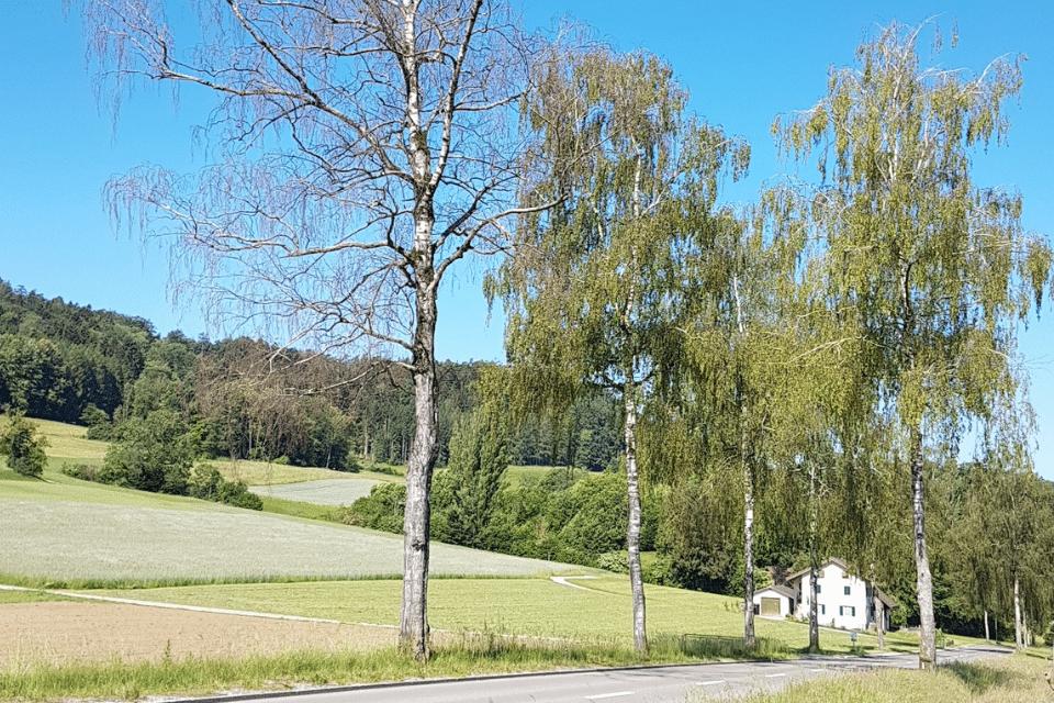 Vorbereitung des Baumbestands für den Winter